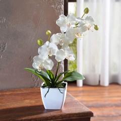 """Декоративное растение """"Орхидея"""" в горшке, В 40 см"""