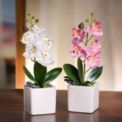 """Декоративные растения """"Орхидеи"""" в горшочках, 2 шт."""