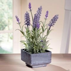 """Декоративное растение """"Лаванда"""" в горшке, В 24 см"""