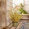 """Декоративное растение """"Степная трава"""" В 68 см"""