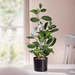 """Декоративное растение """"Фикус"""" В 48 см"""