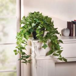 """Декоративное растение """"Плющ"""" В 80 см"""