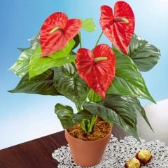 """Декоративное растение """"Фламинго"""" В 50 см"""