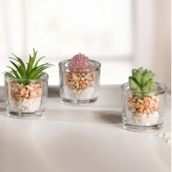 """Декоративные растения """"Суккуленты в вазочках"""" 3 штуки"""