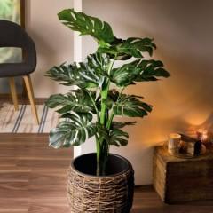 """Декоративное растение """"Филодендрон"""", высота 90 см"""
