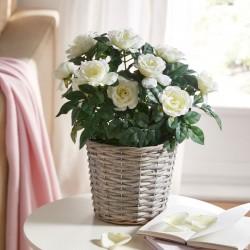 """Декоративное растение """"Белые розы"""", высота 37 см"""